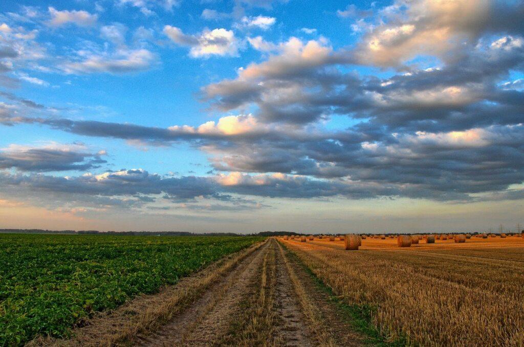 Aspectos clave en la agricultura de México actualmente