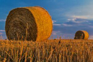 Día mundial de la agricultura 2021: ¿cuáles son las tendencias en México?